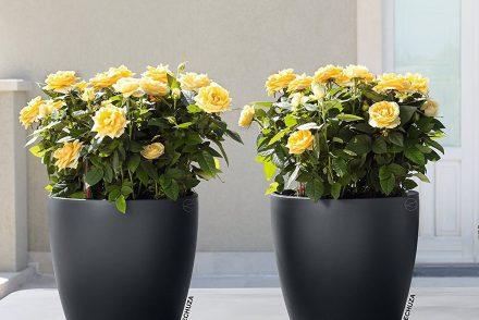 due vasi con irrigazione automatica